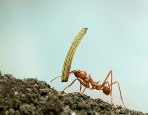 Jak na mravence v trávníku