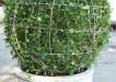 Jak vytvarovat efektni rostlinnou spiralu 2