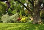 Funkce stromu v zahrade 1
