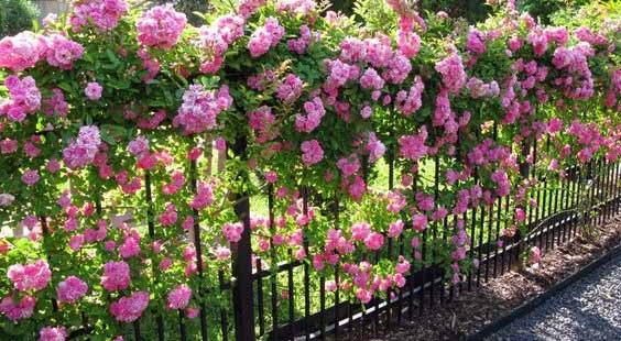 ozdobte svuj plot kvetinami 1