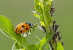 Zatocte se zahradnimi skudci ekologicky 3