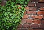 Brectan zakryje nevzhledna mista v zahrade 2
